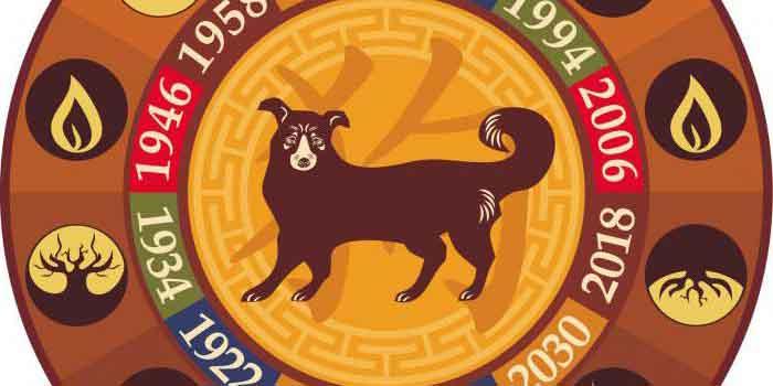 Собака на китайском круге