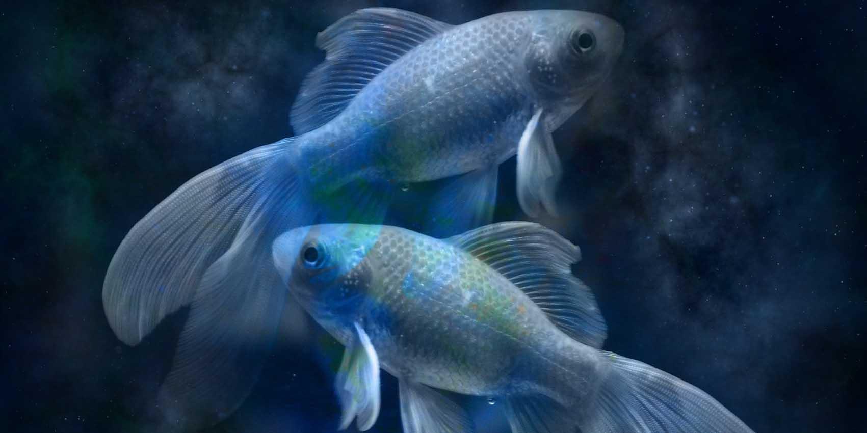 Две крупные Рыбы в воде